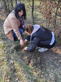 Ще пів сотні ошатних дерев прикрасили Зеленогайську школу
