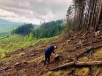 За незаконну порубку дерев на території «Зубровиці» нараховано шкоду на суму понад 3 млн грн
